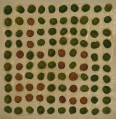 Ein 10 x 10 Pixel-Bild aus Erbsen und Linsen, mit großem Pixelabstand